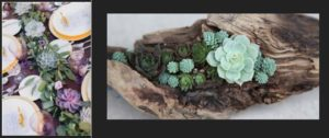 1Succulents-as-an-Event-Decoration-in-Dallas